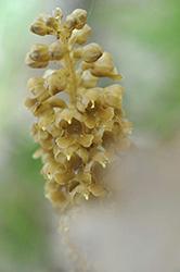 Campo dei fiori foto 5_altezza250pixel