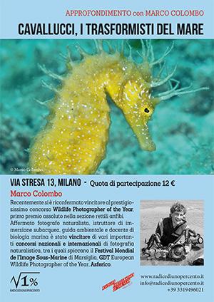 incontro-cavallucci-marini-web
