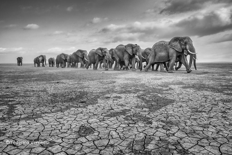 foto-elefanti