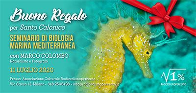 Buono regalo Seminario Biologia Marina 400x190 pixel