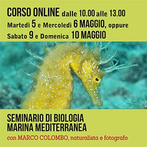 Locandina seminario di Biologia Marina #online 300x300 pixel