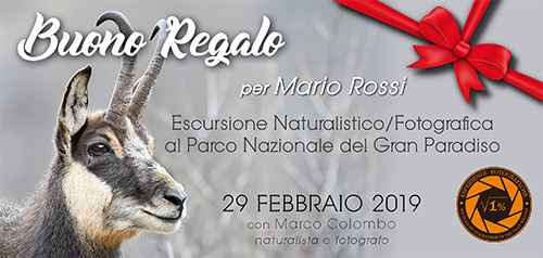 Buono Regalo Gran Paradiso 29 Febbraio - 500x238 pixel