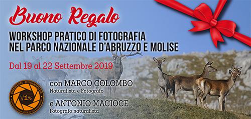 Buono Regalo Workshop Abruzzo Settembre 2019 - 500x238 pixel