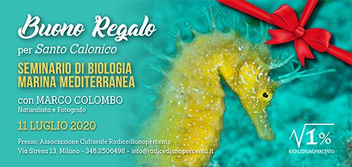 Buono regalo Seminario Biologia Marina 500x238 pixel