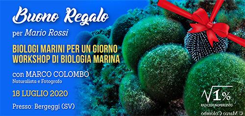 Buono regalo Seminario Biologia Marina Pratico 500x238 pixel