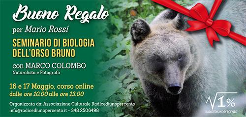 Buono regalo Seminario Biologia dell'Orso bruno 500x238 pixel