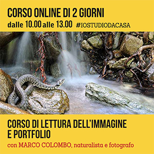 Locandina lettura portfolio ONLINE 300x300 pixel