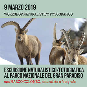 Locandina workshop di Gran Paradiso