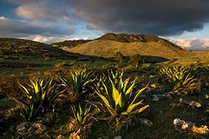 16 piante nel deserto 301x200 pixel