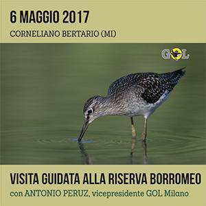 Locandina visita guidata Riserva Borromeo 6 Maggio 2017