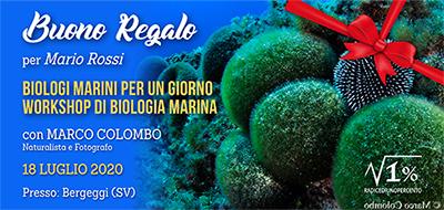 Buono regalo Seminario Biologia Marina Pratico 400x190 pixel
