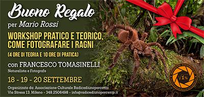 Buono Regalo Corso Ragni 400x190