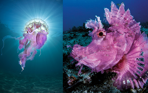 aqua-misteri-del-mondo-sommerso 600x381 pixel