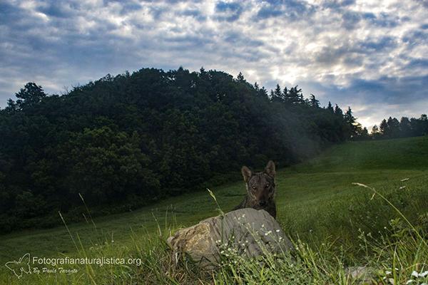 corso avvicinare gli animali (6) 600x400 pixel