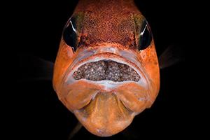 pesce 300x200 pixel