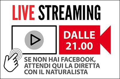 Diretta Streaming per pagina interna - incontri 400pixel