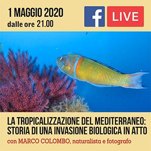 Locandina Incontro Tropicalizzazione del mediterraneo #ONLINE