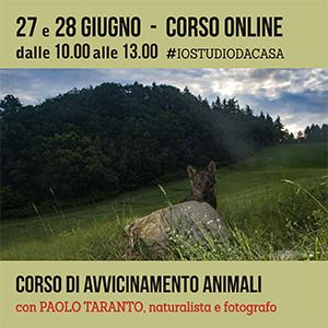 Locandina corso di avvicinamento animali online (solo Taranto) 300x300 pixel
