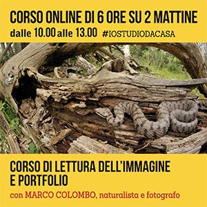 Locandina lettura portfolio ONLINE