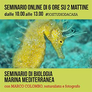 Locandina seminario di Biologia Marina #online