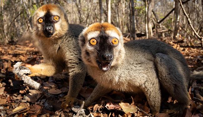 Madagascar 1 - 650 pixel