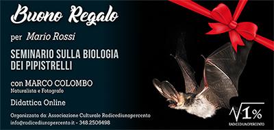 buono_regalo-seminario_pipistrelli_400_x_190_pixel
