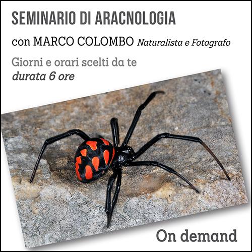 aracnologia_per_acquisto_corsi
