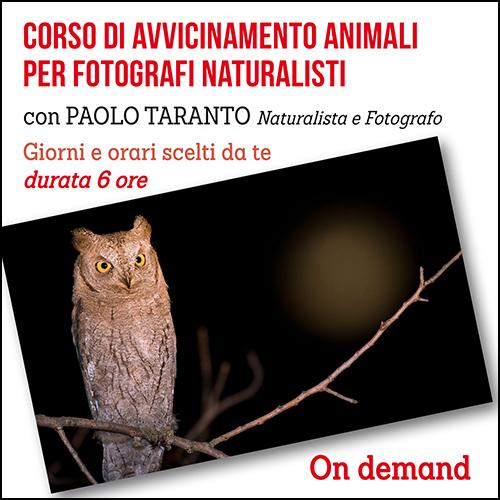 avvicinamento_animali_taranto_per_acquisto_corsi