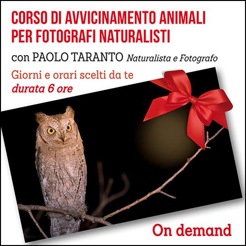 buono_regalo_avvicinamento_animali_500x500pixel