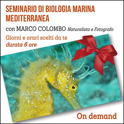 buono_regalo_biologia_marina_500x500pixel_ok