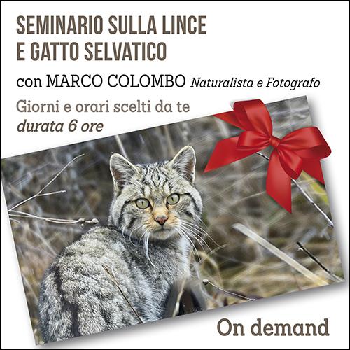 buono_regalo_lince_e_gatto_500x500pixel_ok