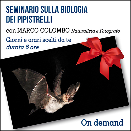 buono_regalo_pipistrelli_500x500_pixel