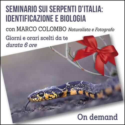 buono_regalo_serpenti_500x500pixel_ok