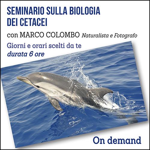 cetacei_per_acquisto_corsi