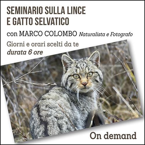 lince_e_gatto_per_acquisto_corsi
