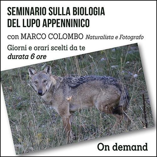 lupo_per_acquisto_corsi