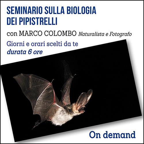 pipistrelli_per_acquisto_corsi