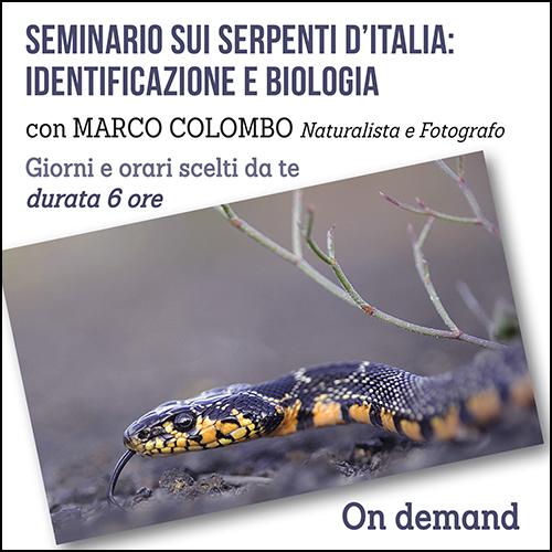 serpenti_per_acquisto_corsi