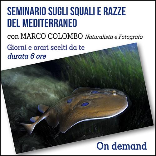 squali_e_razze_per_acquisto_corsi