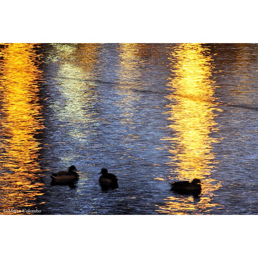 04 Impressioni sul lago 850×850 pixel