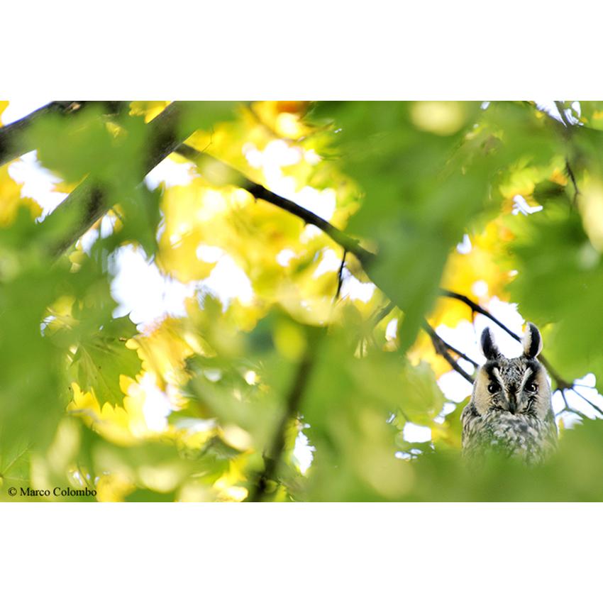 12 Alberi e gufi 850×850 pixel