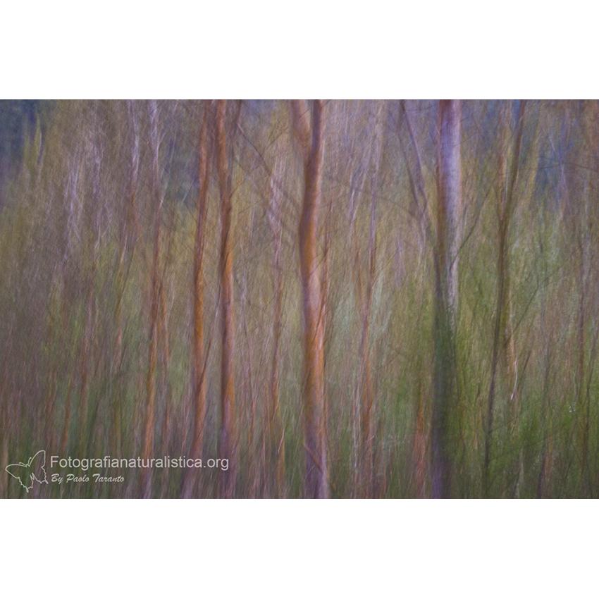 12 Landscape 850×850 pixel
