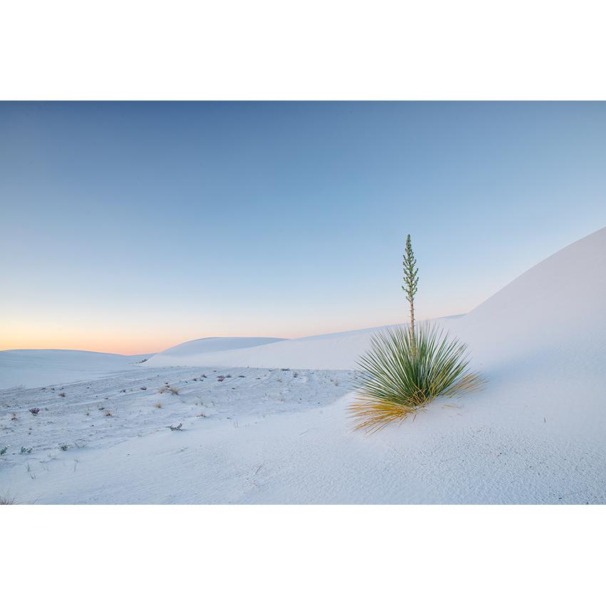 14 stampa Stefano Baglioni 850×850 pixel