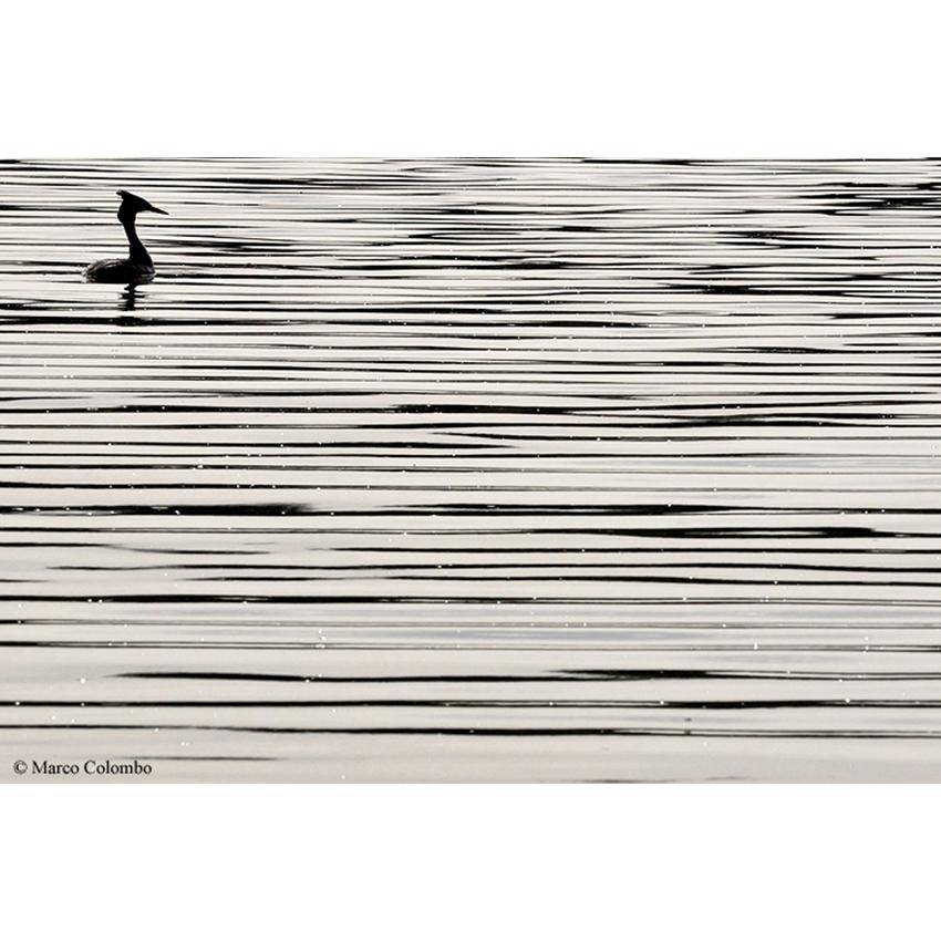 26 Linee di inchiostro 850×850 pixel