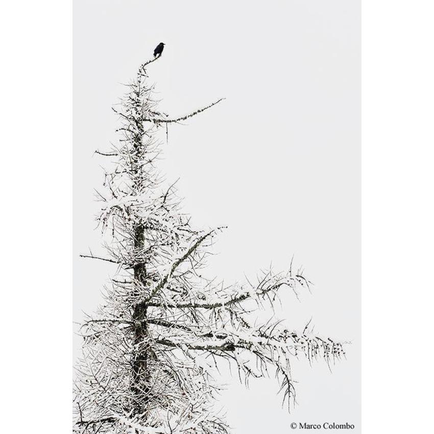 31 Solitudine 850×850 pixel