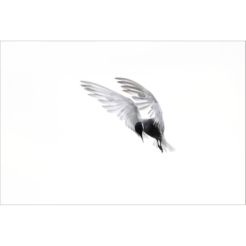 7 stampa Stefano Baglioni 850×850 pixel