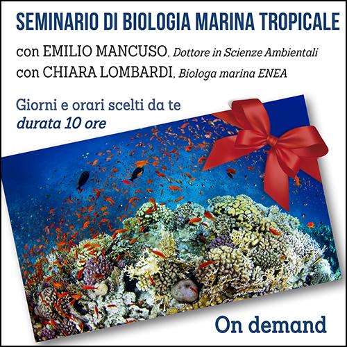 buono_regalo_biologia_marina_tropicale_500x500pixel