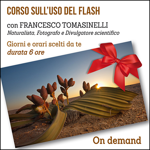 buono_regalo_flash_ondemand_500x500pixel_new