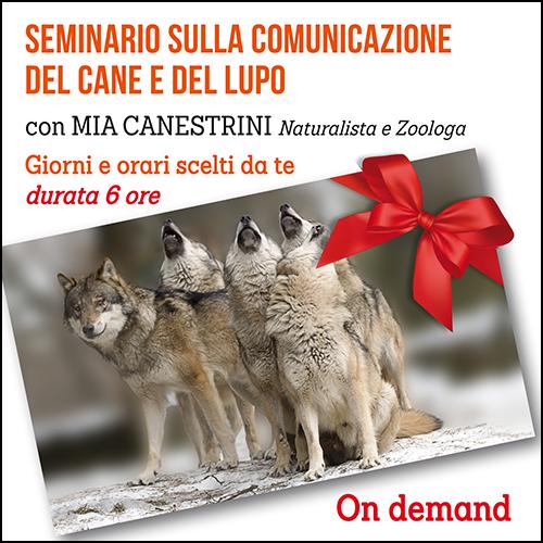 buono_regalo_seminario_comunicaz_lupo_e_canei_500x500pixel