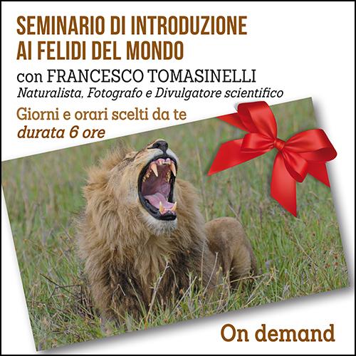 buono_regalo_seminario_felidi_500x500pixel
